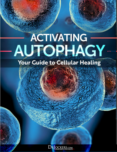 Activating Autophagy: Your Guide to Cellular Healing eGuide